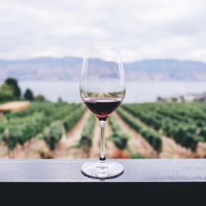 vin-bio-vignes